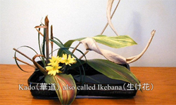 Japanese culture -日本の文化-
