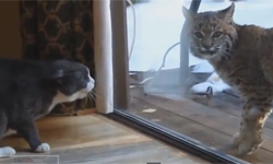Funny Cats Compilation | November 2013